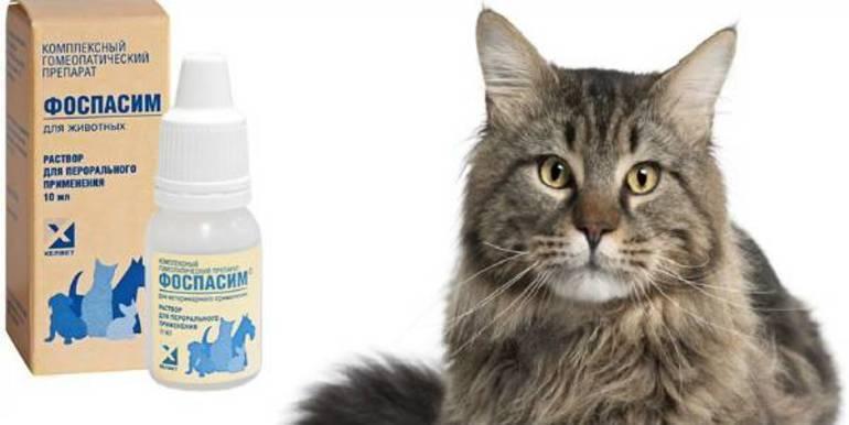 «фоспасим» (раствор для инъекций и капли) для кошек: состав, инструкция по применению