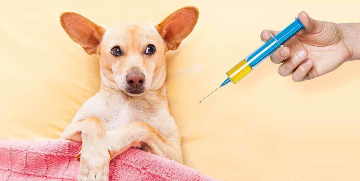 Подскажите про вакцинацию собак!!! - запись пользователя евгения (id2203853) в сообществе мы против прививок! в категории перлы про вакцинацию или как не скучно жить при буйной фантазии - babyblog.ru