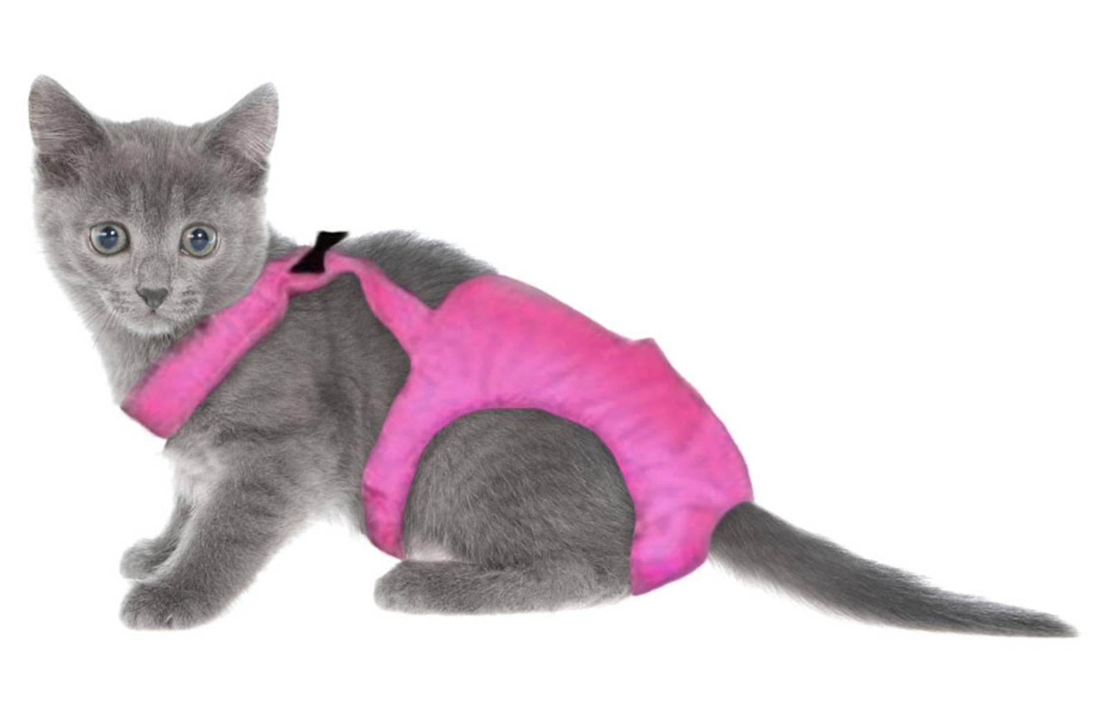 Катозал для кошек: показания и особенности применения