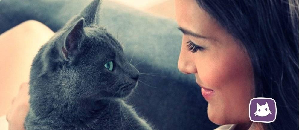 Почему нельзя смотреть в глаза кошке: суеверия и реальность