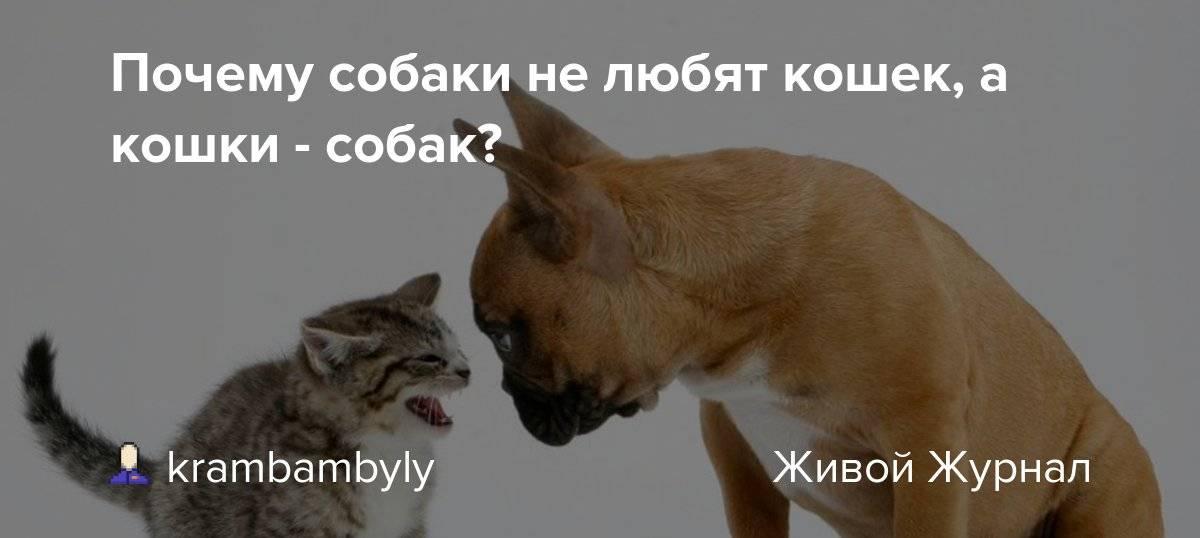 Почему собаки не любят кошек - причины старой вражды