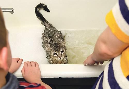 Как часто мыть кошку: купание кошки