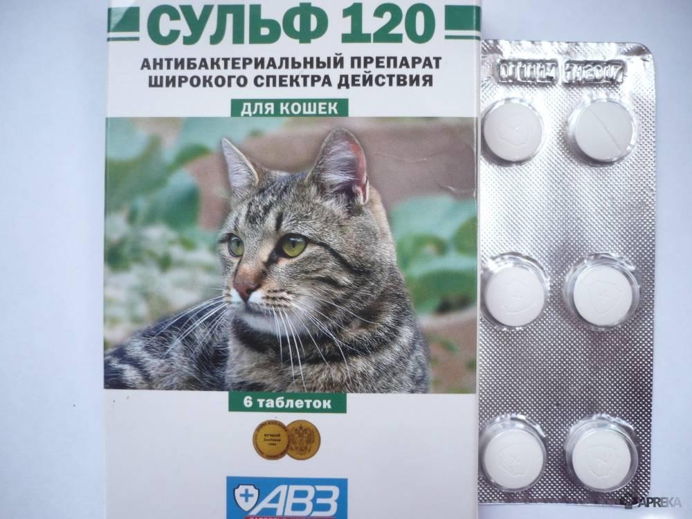 Какие противозачаточные для кошек существуют?