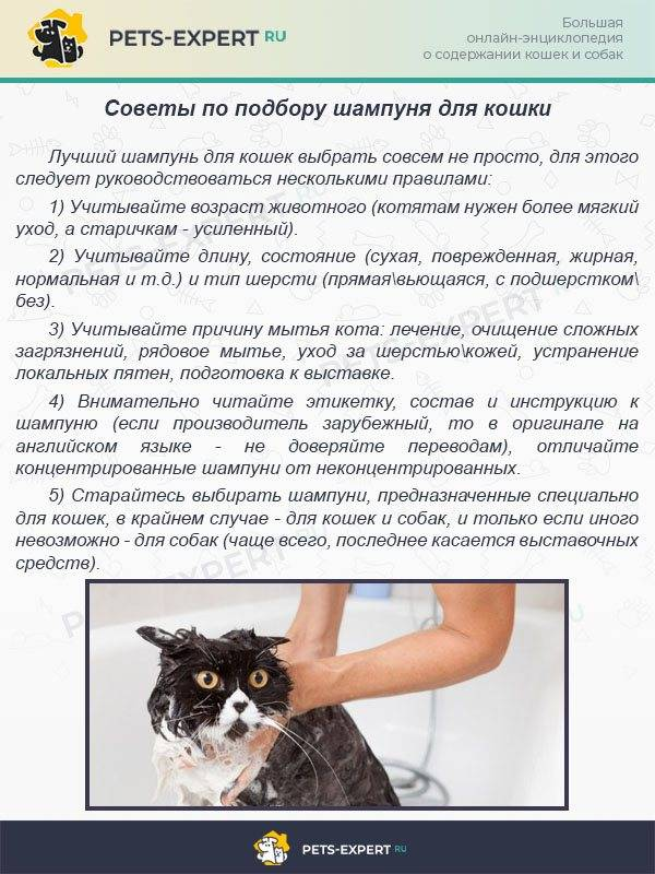 Как помыть кота: инструкция для заботливых хозяев