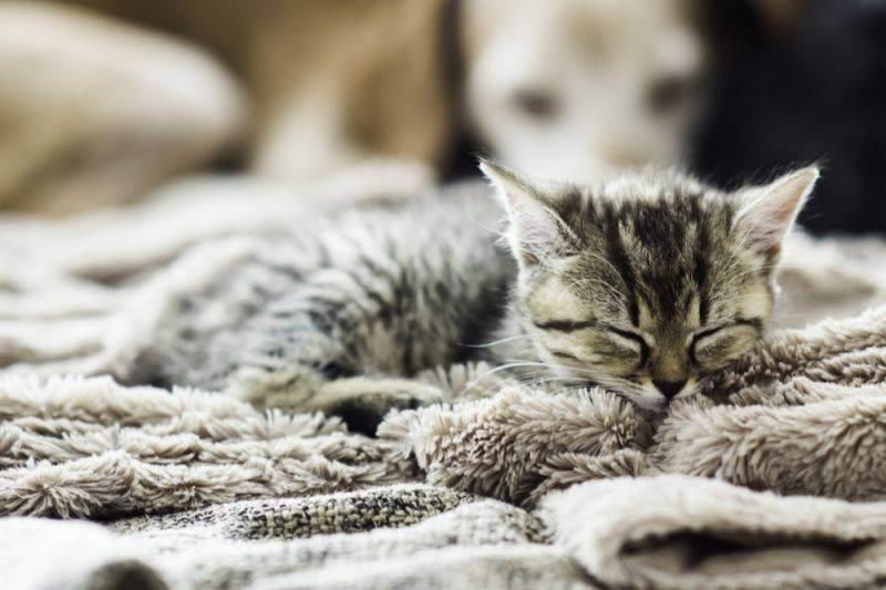 Насморк у кошек: причины, как лечить в домашних условиях
