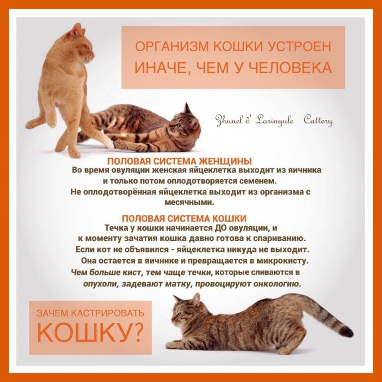 Можно кормить не породистую стерилизационую кошку только вареной рыбой