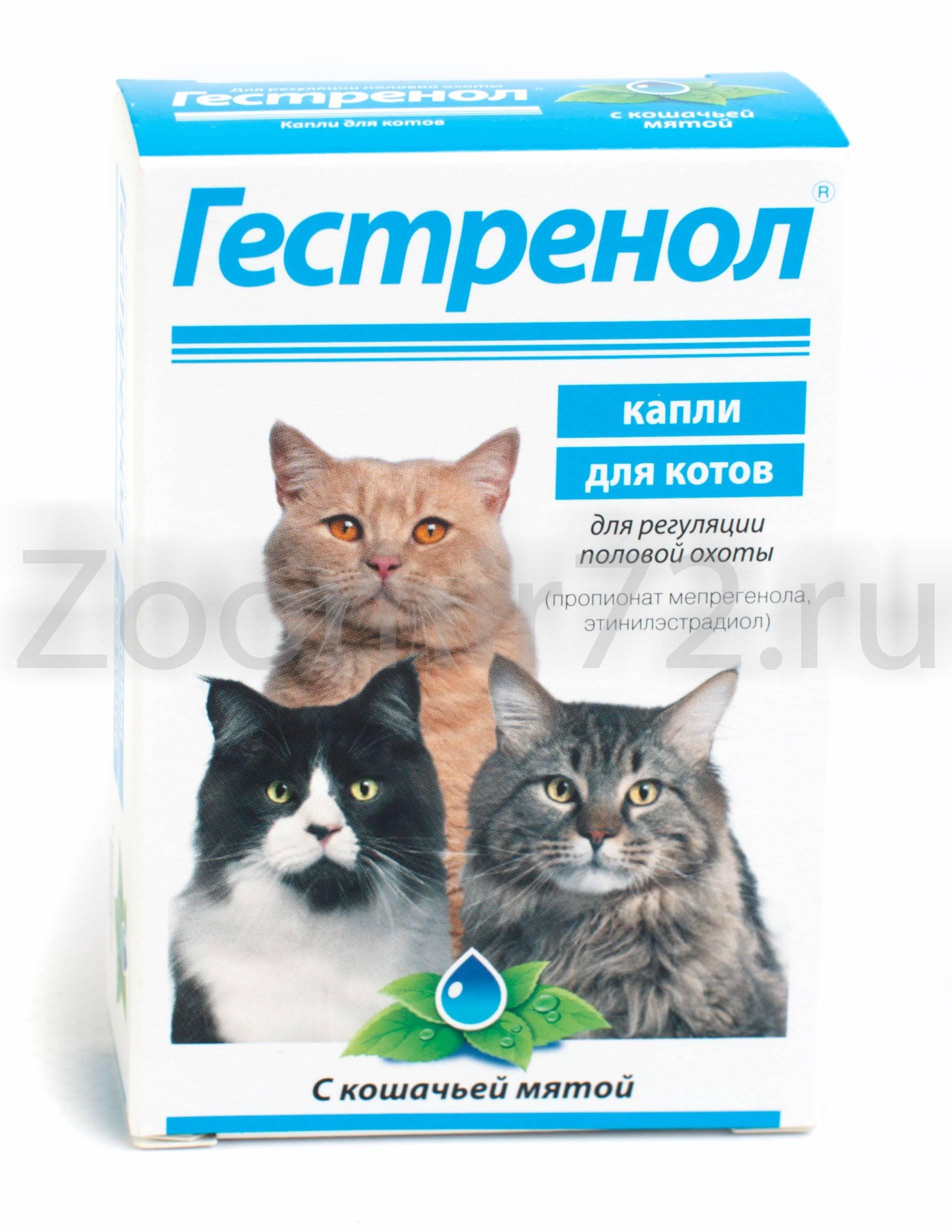 Капли от гуляния кошки