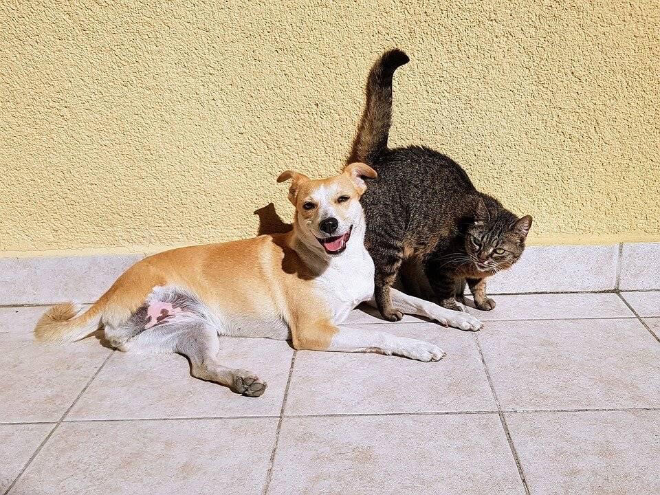 Как подружить кошку с собакой: 110 фото и видео реальных способов и практические советы от профи