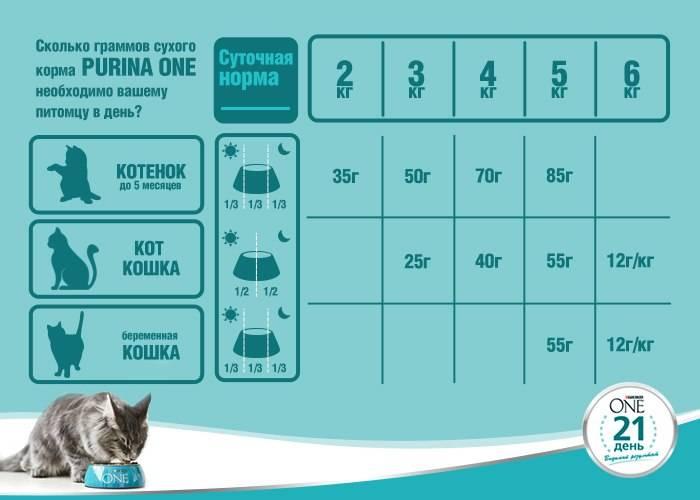Чем кормить котенка в 1–2 месяца и далее без кошки в домашних условиях?