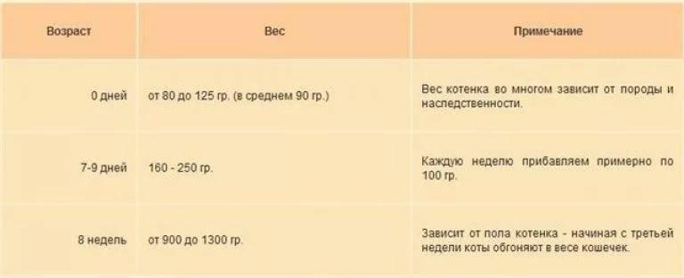 Сколько раз в день должна писать кошка - oozoo.ru