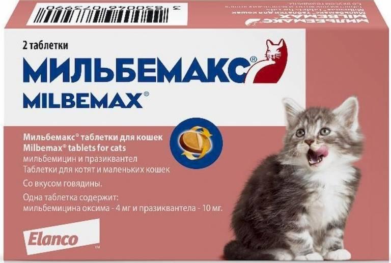 Таблетки от глистов для собак: виды, дозировки