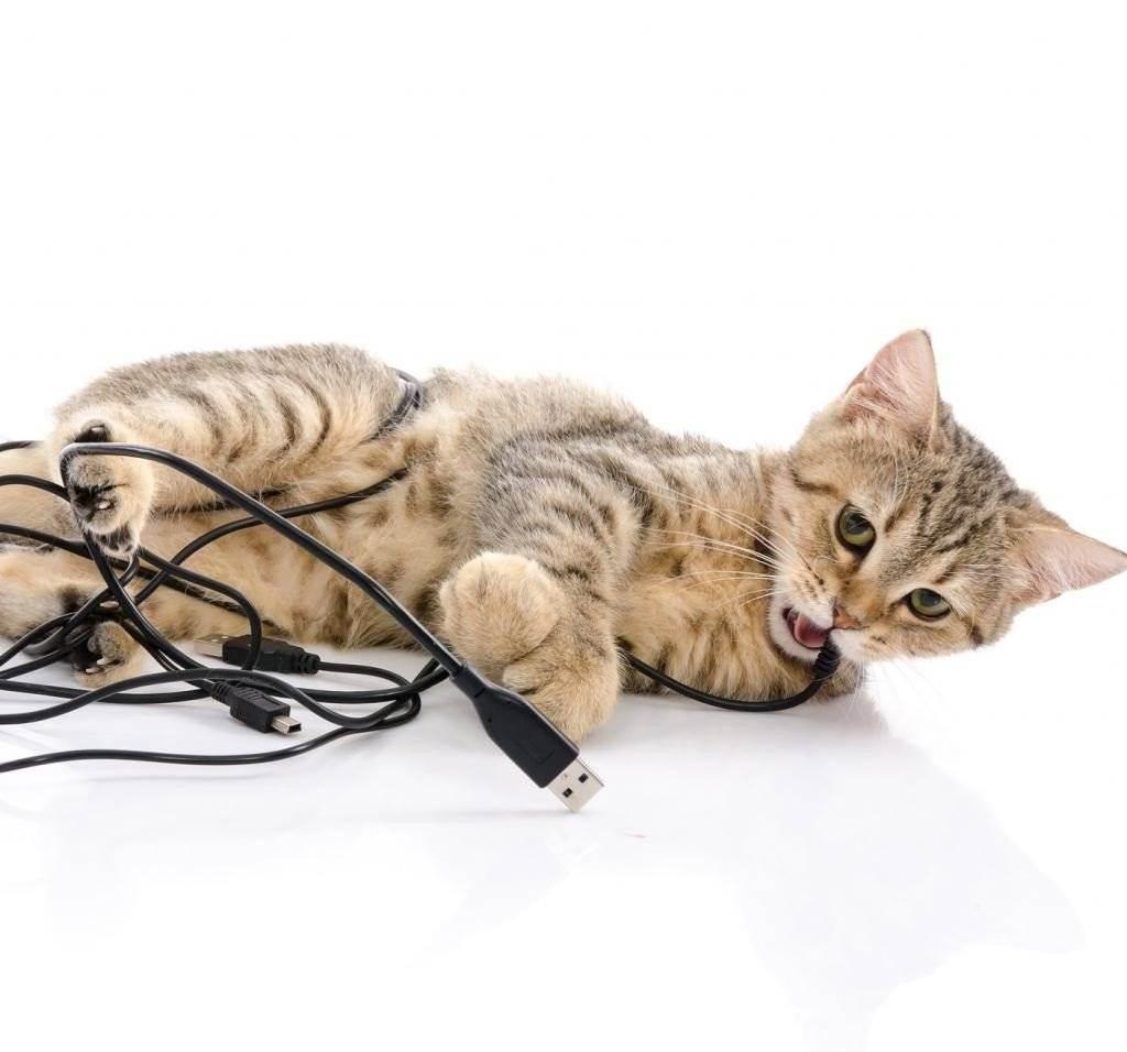 6 способов, как отучить кошку грызть провода и много полезных советов