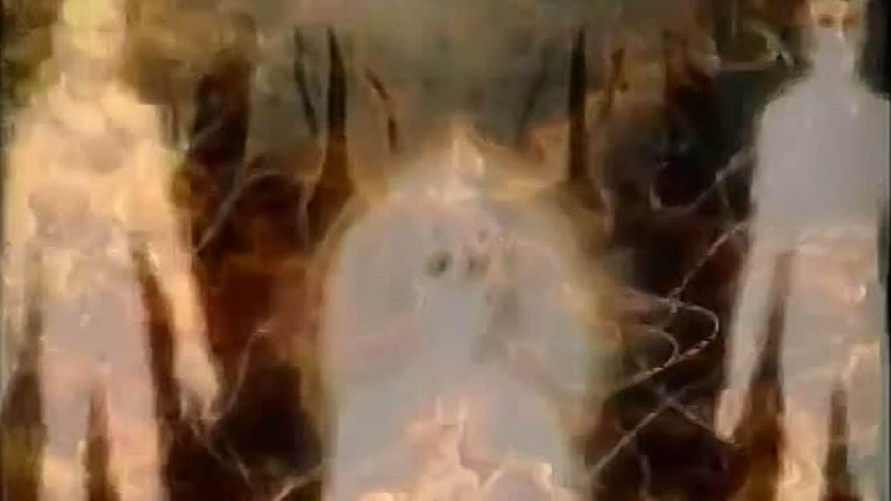 Есть ли душа у животных — что говорит православие