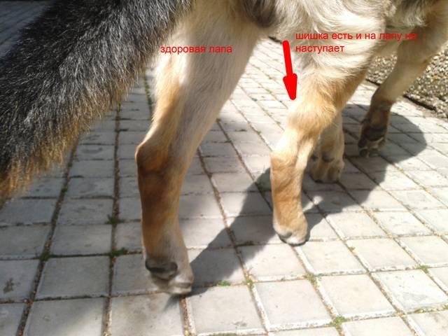 Почему кот плохо ходит задними лапами?