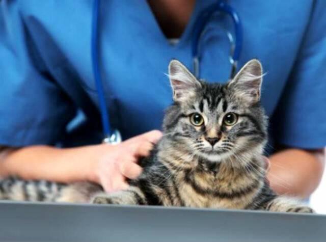 Уколы для кошек вместо стерилизации