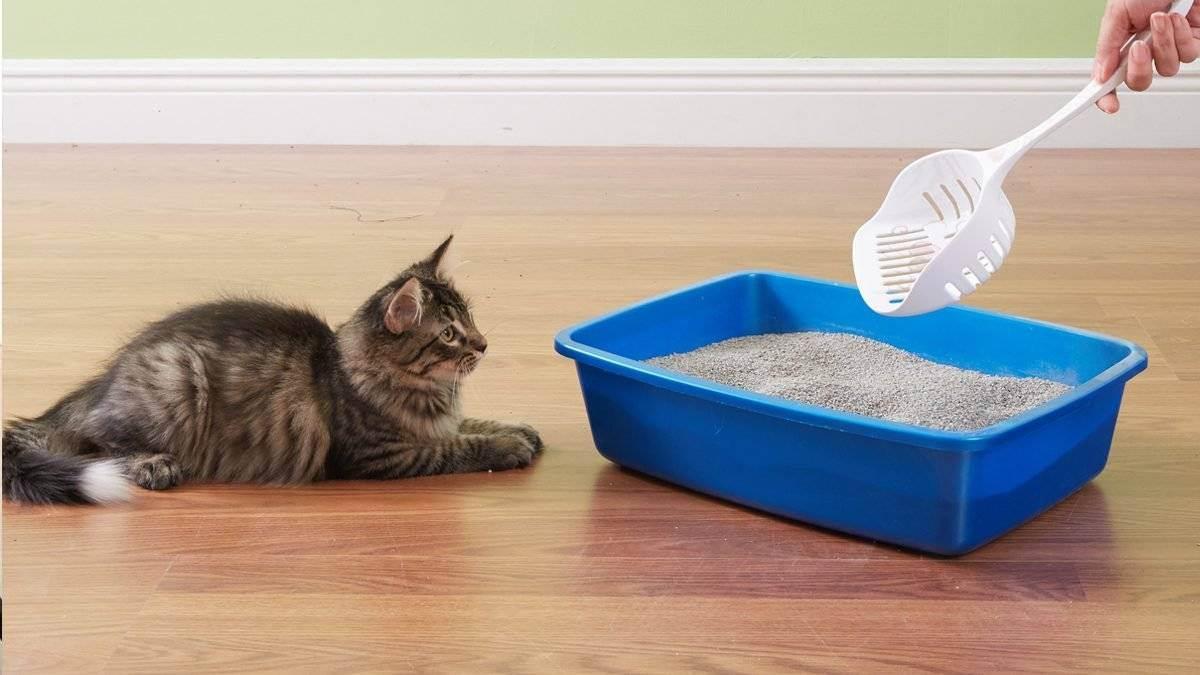 Как отучить котенка гадить в неположенных местах, советы