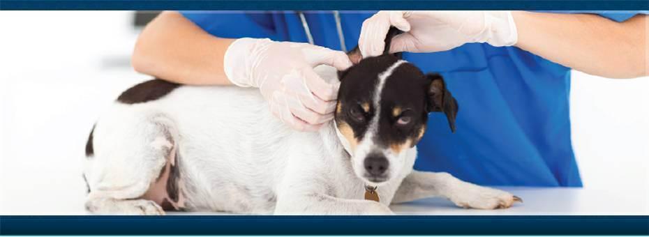 Открываем ветеринарную клинику