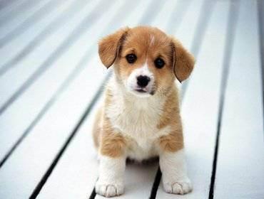 Как уговорить своих родителей завести собаку