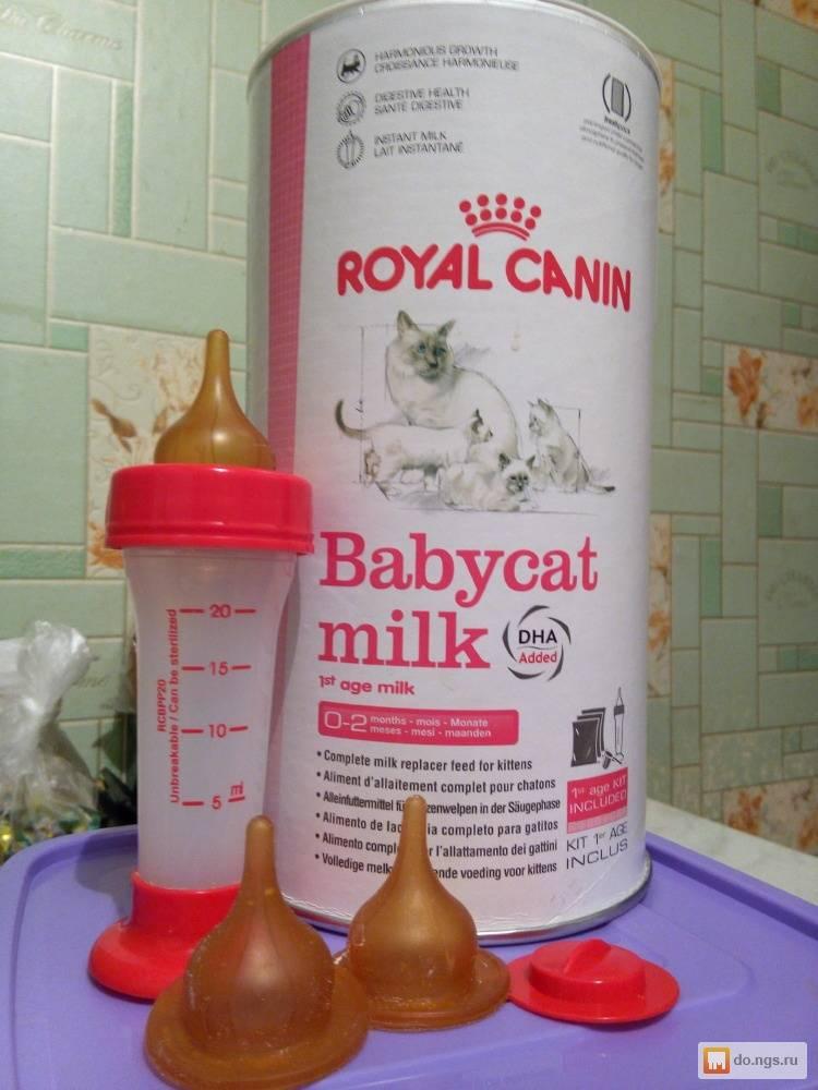 Чем кормить котенка в 1 месяц без кошки: смеси, корма