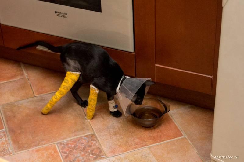 Что делать если кот сломал лапу?
