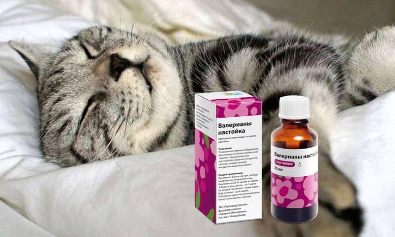 Валерьянка для котов (21 фото): почему кошки ее любят? как она действует на котов? можно ли давать кошкам валериану в таблетках и в каплях?