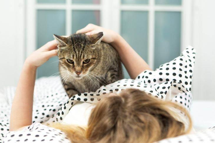 Почему люди любят кошек? только факты о взаимоотношениях человека и кошки