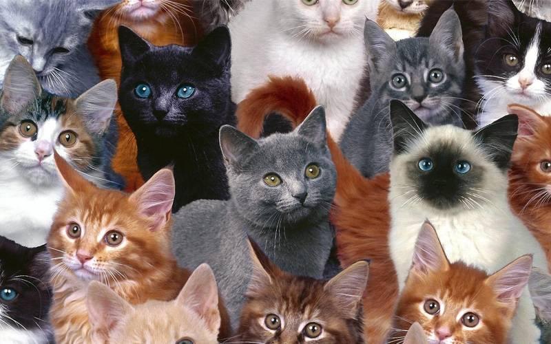 Красивые имена для котов мальчиков — редкие и запоминающиеся