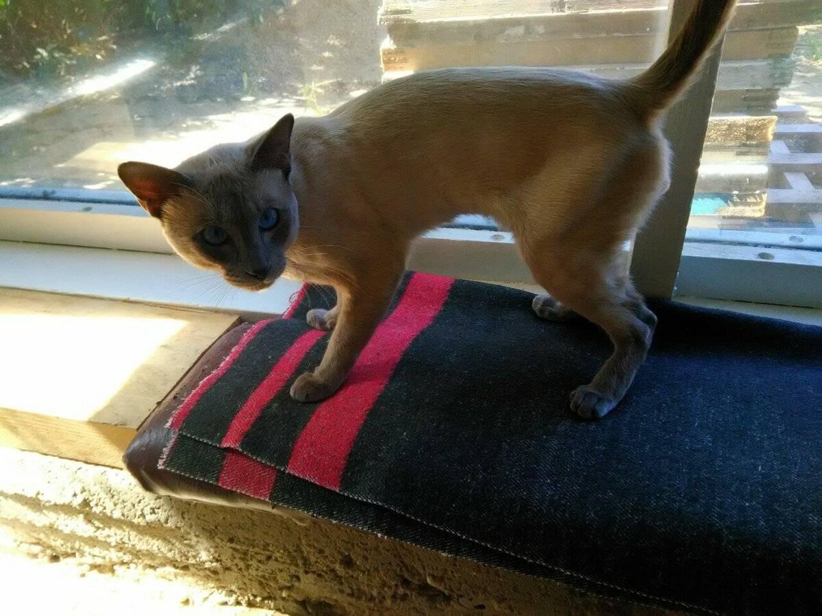 Как отучить кота метить территорию, углы в доме, квартире, без кастрации