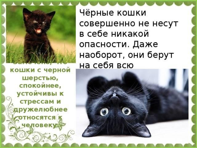 Черная кошка в доме - хорошо это или плохо: народные приметы