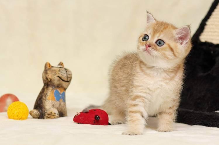 Что нужно приготовить к котенку. что нужно для котенка в квартире? подготовка квартиры к приезду котёнка