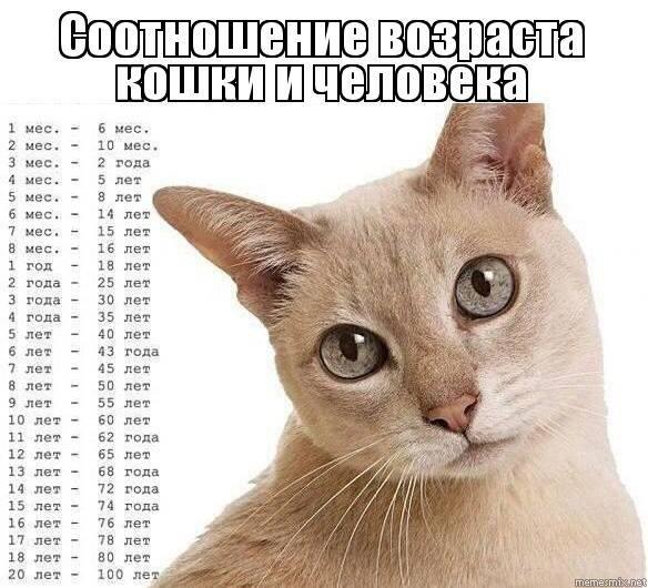Как определить возраст кошки, точные методы и видео инструкция