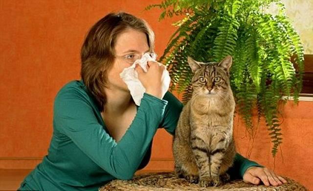 Аллергия на кошек как избавиться. народные методы