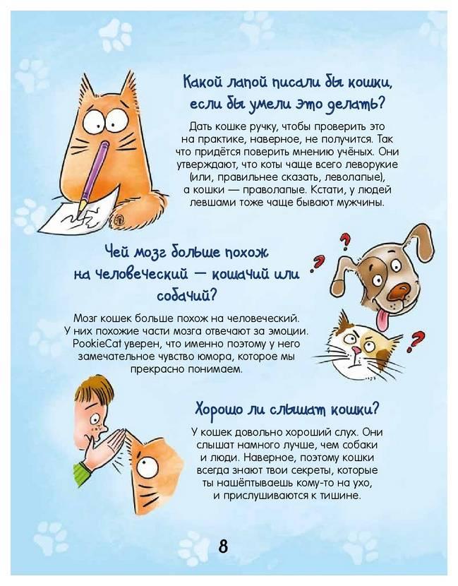 Топ-5 причин, почему мурчат кошки