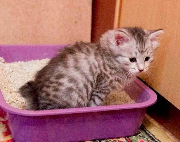 Первые дни котенка в новом доме