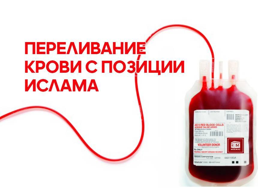 Переливание крови при анемии у кота