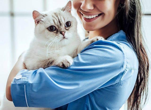 Как устранить запах изо рта у кошки