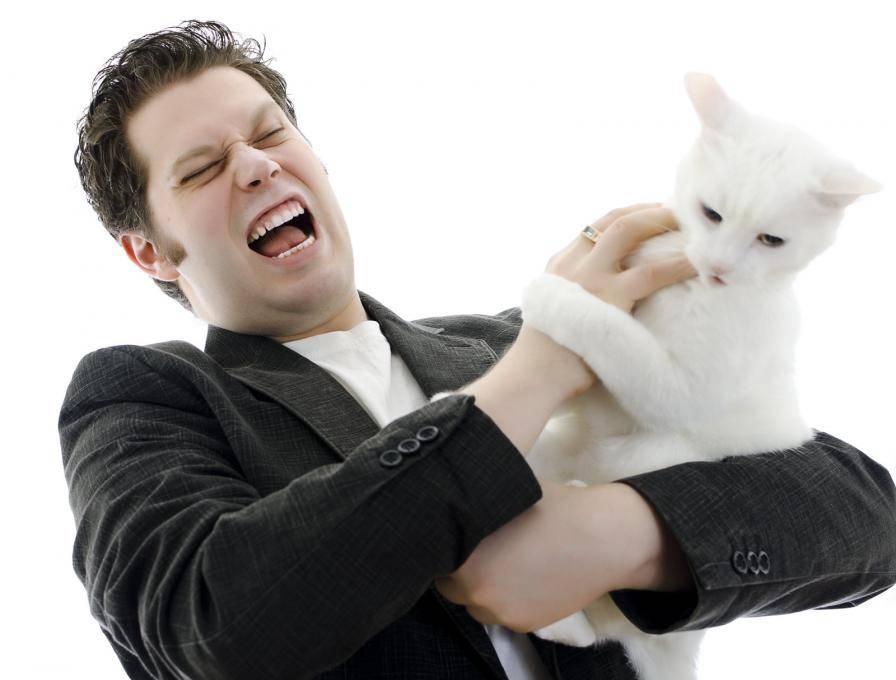 Как отучить кота кусаться, кидаться и царапаться: лучшие приёмы воспитания