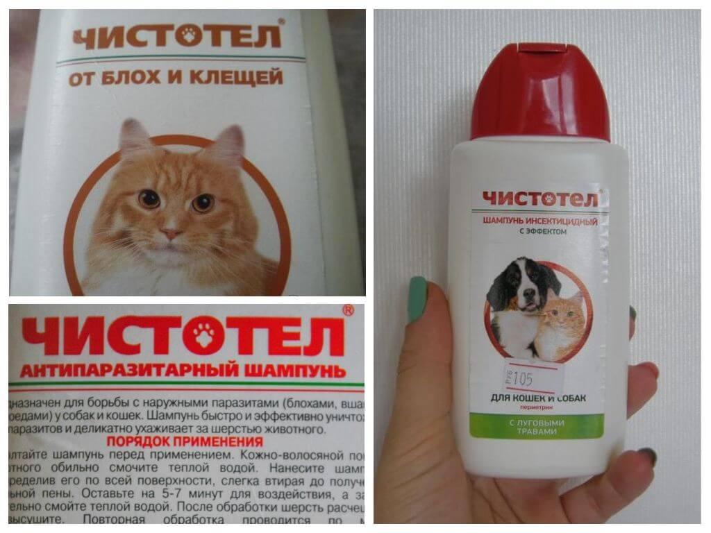 Как вывести блох у кошки: симптомы, медицинские препараты и народные средства