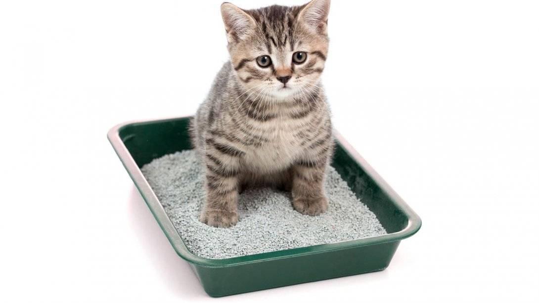 Как приучить кота к лотку: все способы и советы эксперта