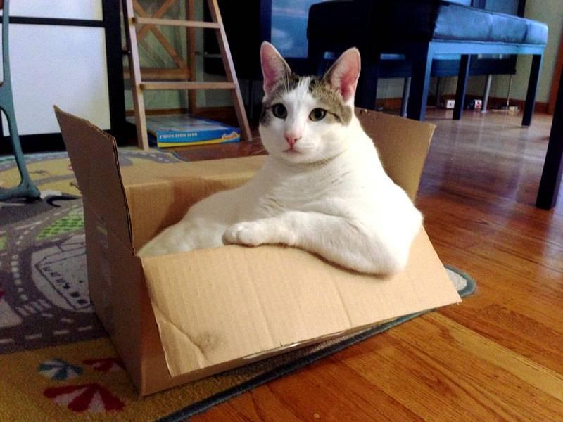 Почему коты любят коробки: правда и мифы