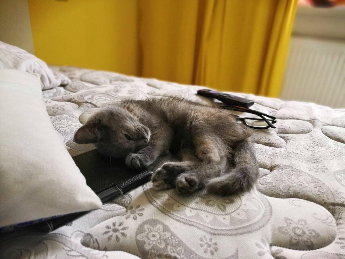 Судороги у кошек: причины, что делать если кот дергается, методы лечения