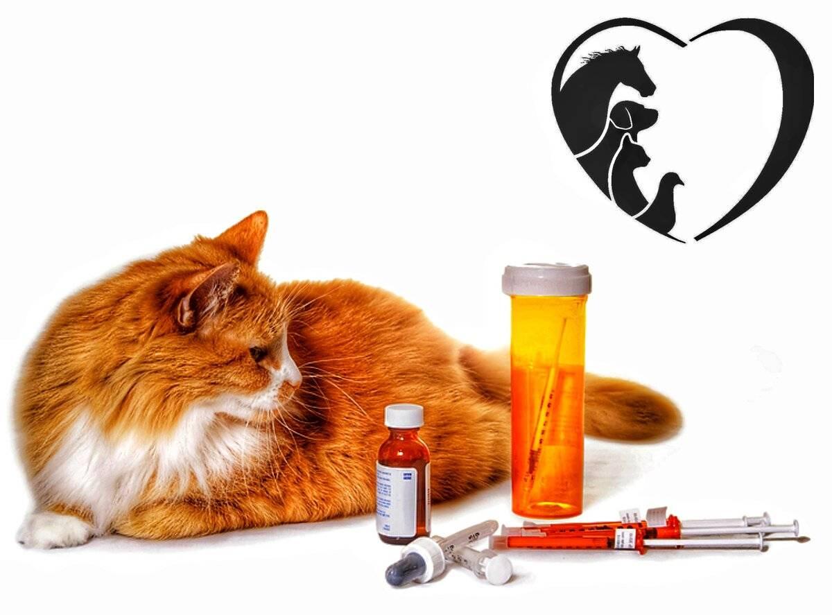 Симптомы и лечение сахарного диабета у кошек