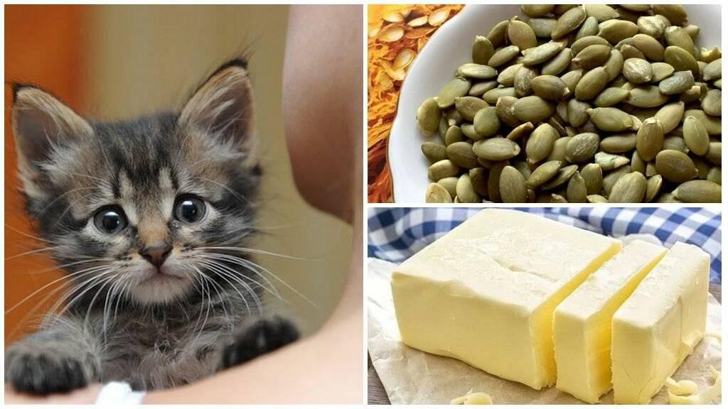 Как вывести глистов у кошки в домашних условиях