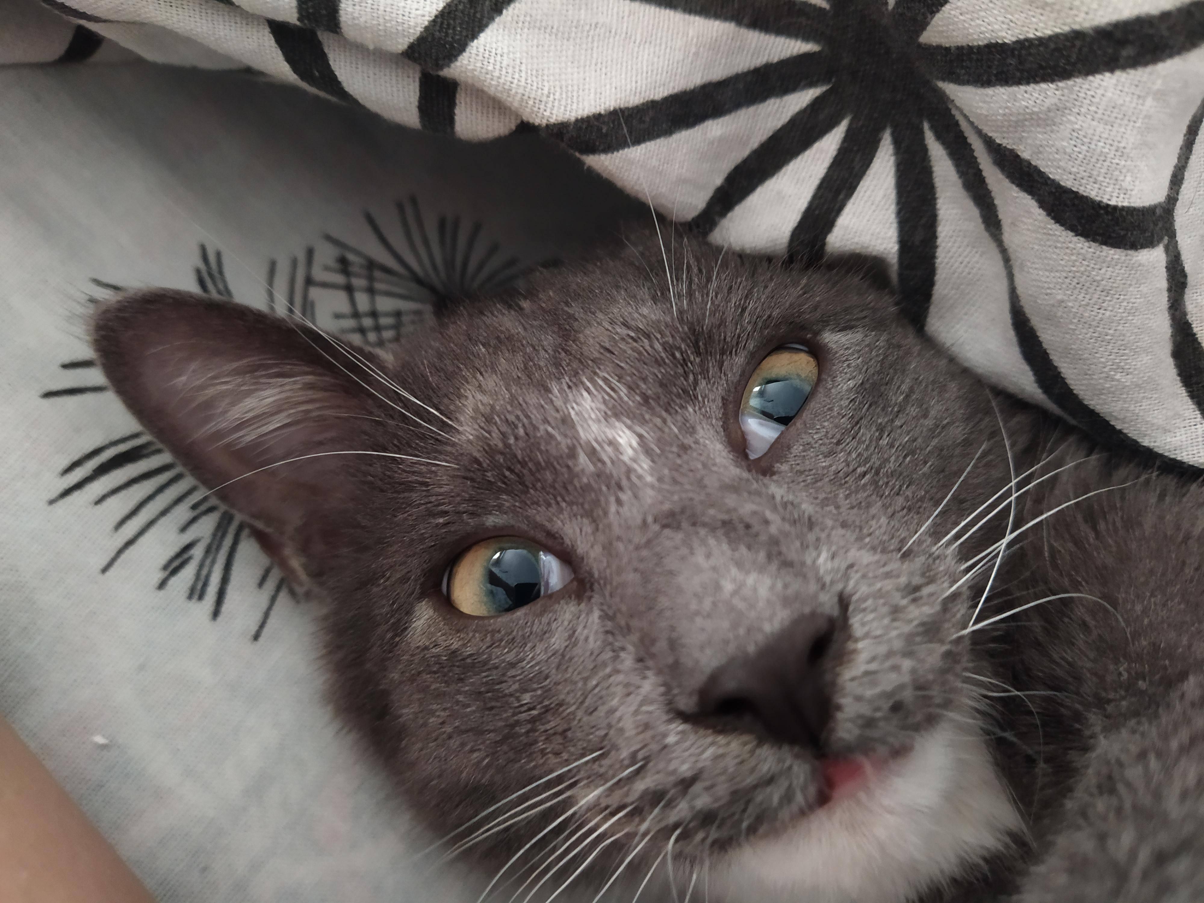 У кошки глаза наполовину закрыты пленкой: причины и что делать?