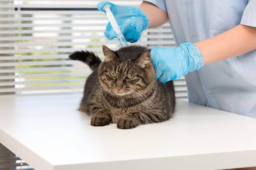 Стерилизация кошек: подготовка к процедуре и послеоперационный уход