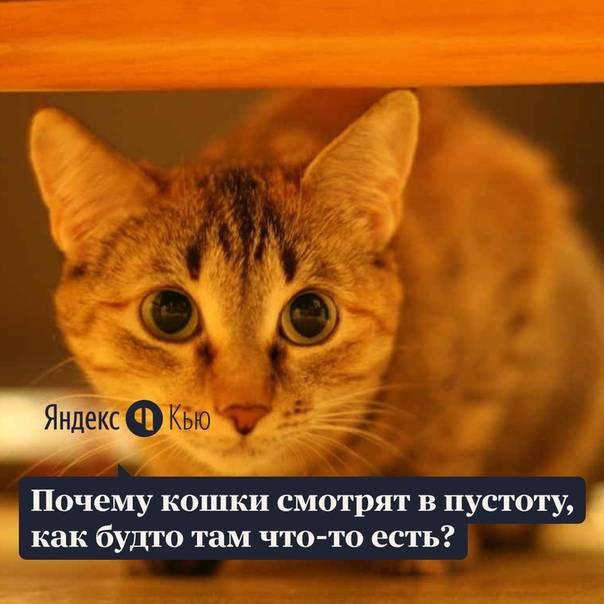 Вот почему кошки смотрят в пустоту, будто там кто-то затаился
