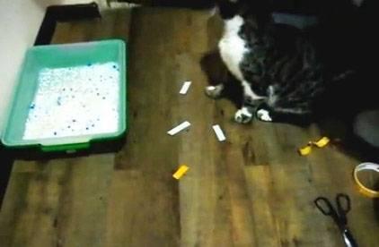 Как отучить кота гадить в неположенном месте — лучшие способы
