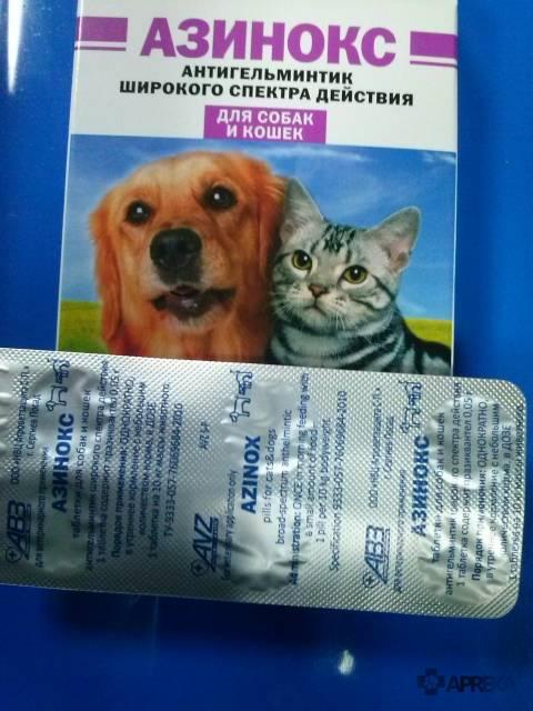 Альбен для кошек: инструкция по применению, советы как не нанести вред и основные характеристики препарата (95 фото)