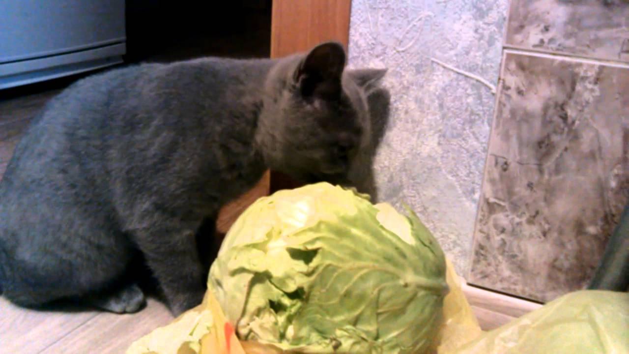Какие овощи можно давать кошкам, какие овощи полезны кошке