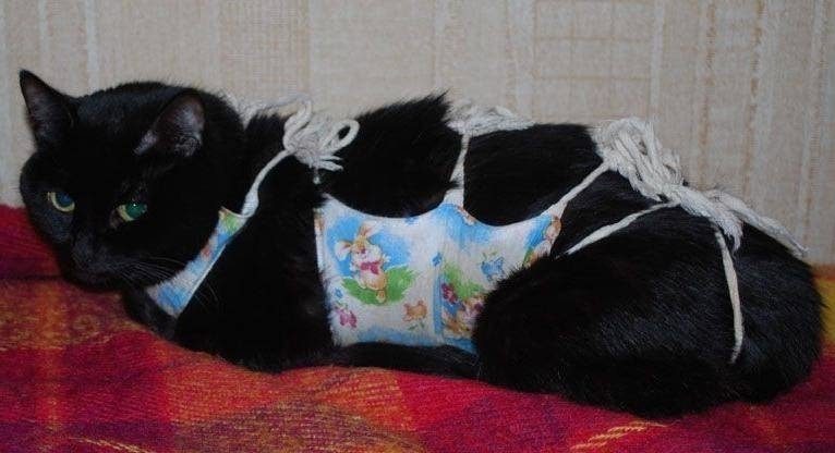 Виды, выбор и использование попон для кошек и котов